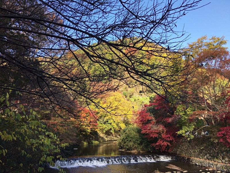 滋賀の紅葉旅
